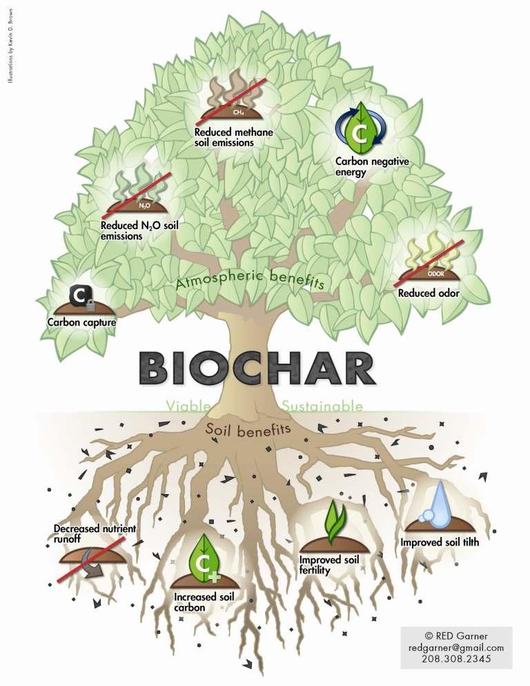 Biochar Tree